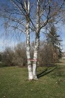 http://www.sarahpettitt.co.uk/files/gimgs/th-35_Trees.jpg